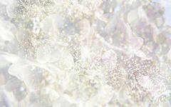 РС-Ледяная роза (Репкина)