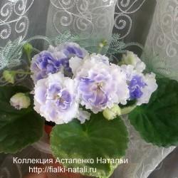 РС-Аквамарин (Репкина)