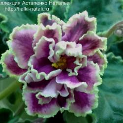 Каменный Цветок (Морев)