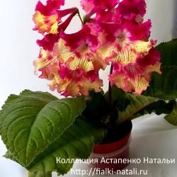 DS-Калахари (П. Еникеев)