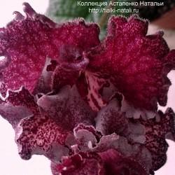 DS-Мохеровый цветок (П.Еникеев)