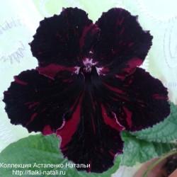 DS-Красное и Черное (П.Еникеев)
