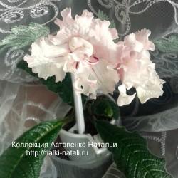 DS-Нежно-розовый (Еникеев)
