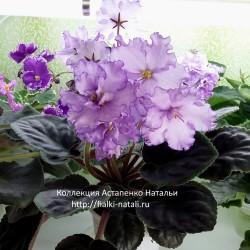 Dn-Fleur (Денисенко)