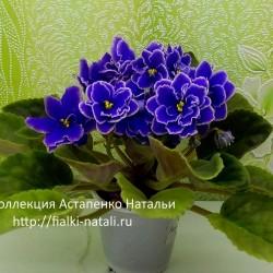 Dn-Морская тайна (034) (Денисенко)