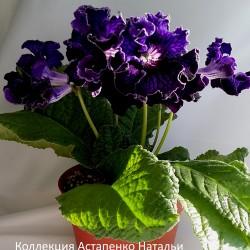 Dem-Гравитация (Демченко)