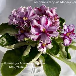 АВ-Ленинградское Мороженое (Фиалковод)