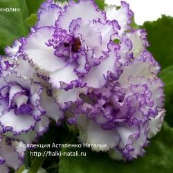 АВ-Кринолин(Фиалковод)